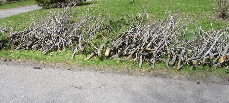 ramassage de branches