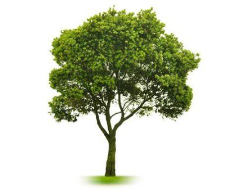 Distribution des arbres du ministère des Forêts, de la Faune et des Parcs, par l'entremise des Clubs 4-H