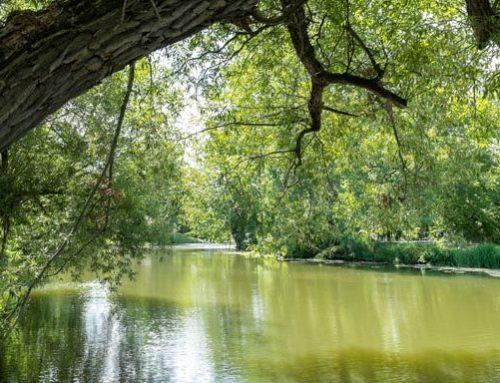 Notre rivière, un atout à protéger