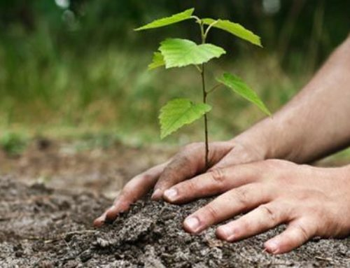 Plantation d'arbres – 24 septembre